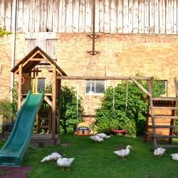 Enten auf Spielplatz