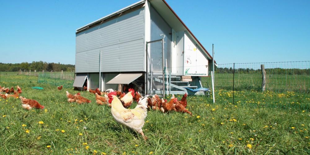 Hühnermobil auf der Wiese