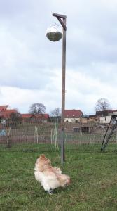 Huhn unter Diskokugel