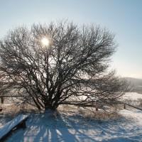Winter auf dem Rummelsberg