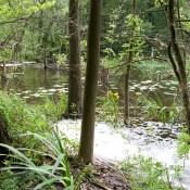 Das Biosphrenreservat Schorfheide-Chorin hat viel unberührte Natur zu bieten