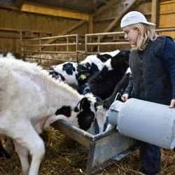 (c) Die Kuhhorster