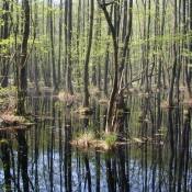 Sumpfgebiet im Fenn