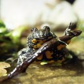 Eines unserer Umweltprojekte: Schutz heimischer Amphibien