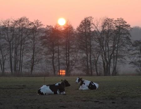 Sonnenuntergang auf der Weide