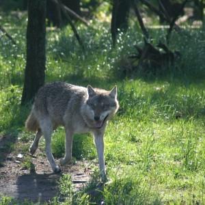 (c) Wildpark Schorfheide