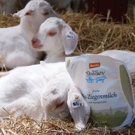 Ziegenmilch im Stroh