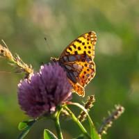Für den Schutz von Flora & Fauna - bei uns wird Naturschutz großgeschrieben