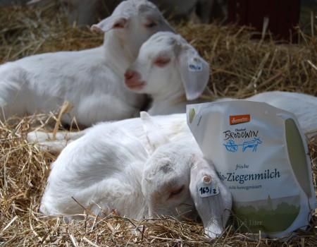 Ziegen-Milch